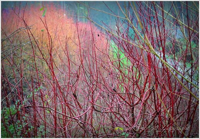 Derrière le gris ... les couleurs de l'hiver Normand ...