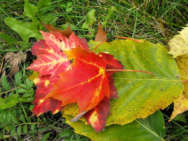 Des feuilles,des feuilles