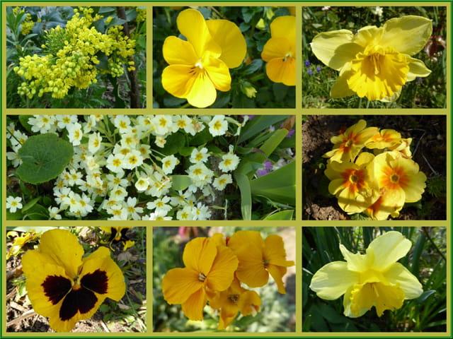 Des fleurs couleur du soleil pour illuminer le printemps