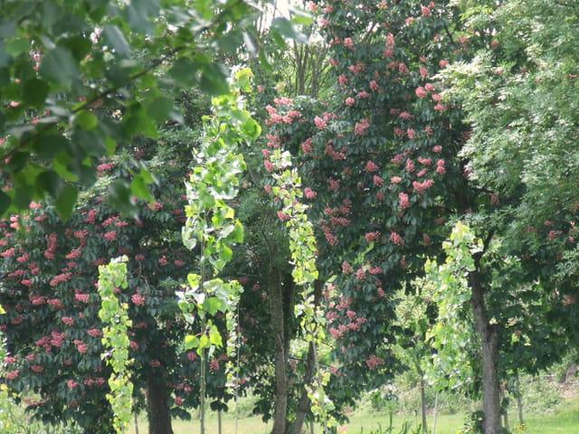 Des fleurs dans les arbres