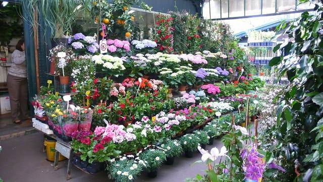 Des fleurs et des fleurs...
