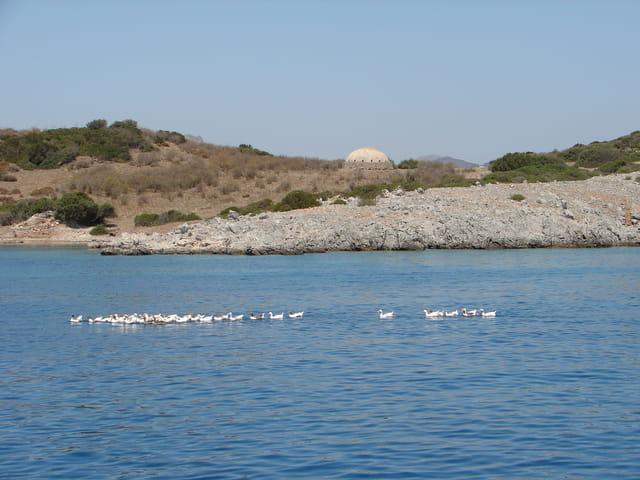 Des oies en mer Egée