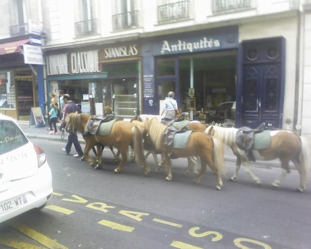Des poneys dans la ville