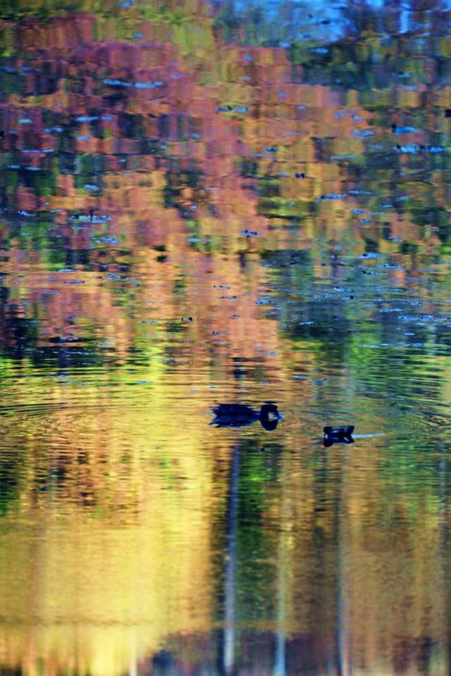 Deux canards sur un rêve