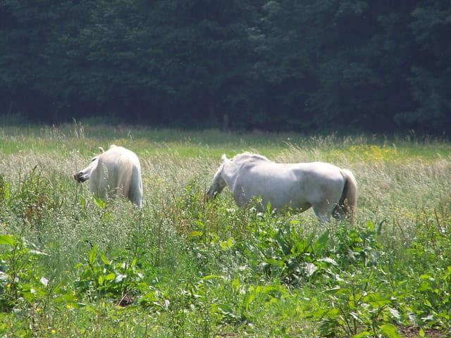 deux chevaux