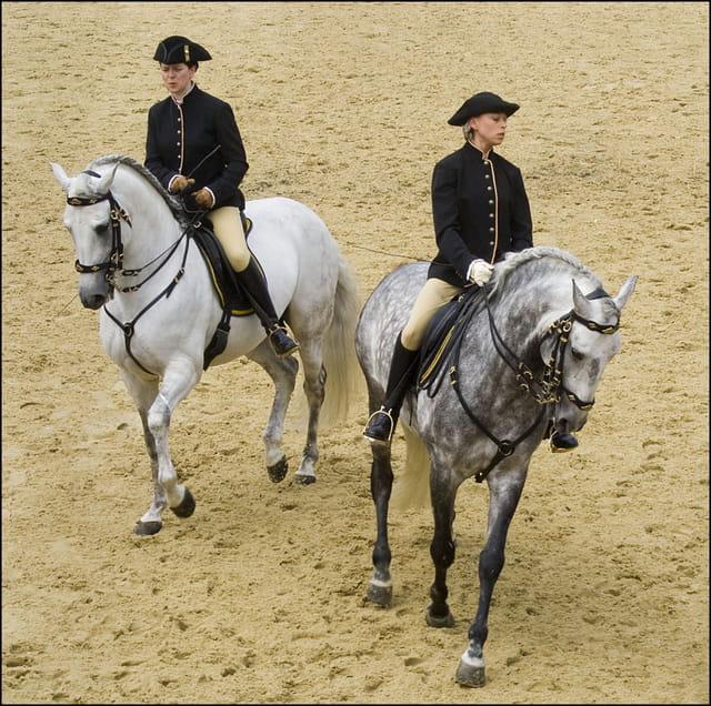 Deux chevaux Lipizzans