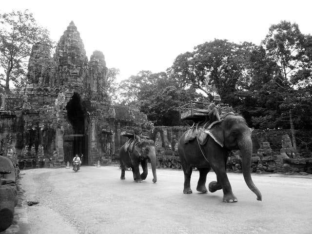 Deux éléphants, une mobylette, des ruines.