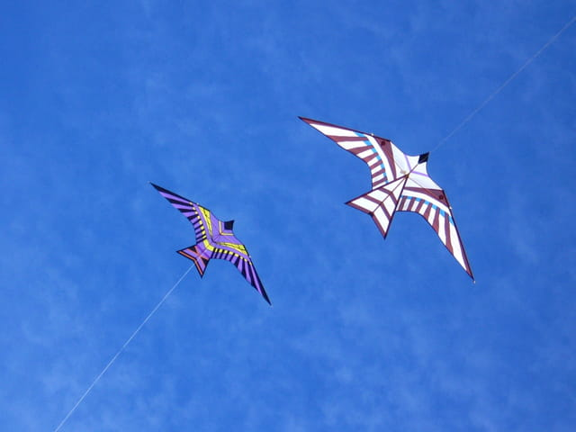 Deux oiseaux planants