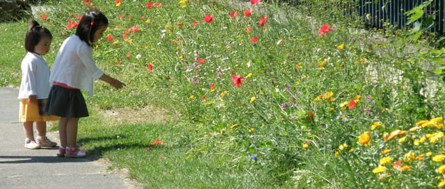 Deux petites fleurs parmi les fleurs