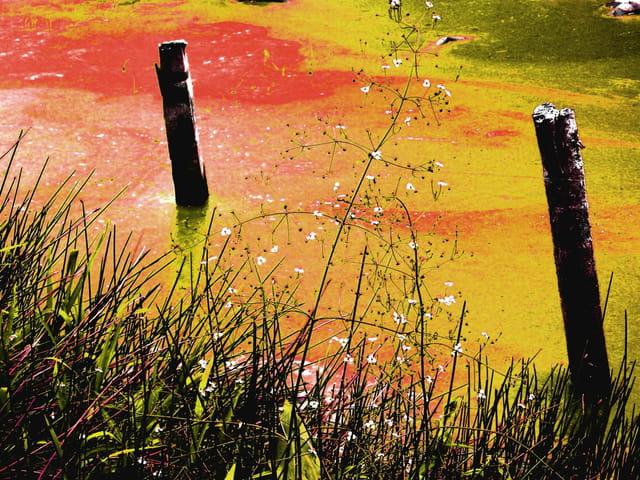 Deux poteaux fond d'étang