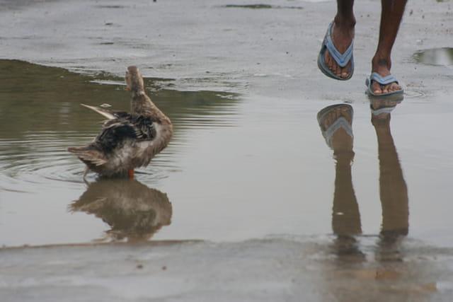 Dhangadhii, Nepal sous la mousson