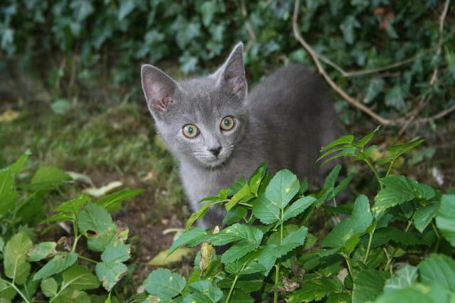 Dino explore le jardin