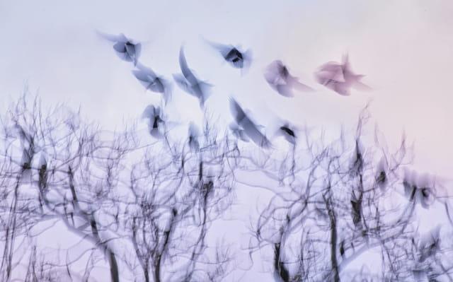 Douçeur de vole d'oiseaux