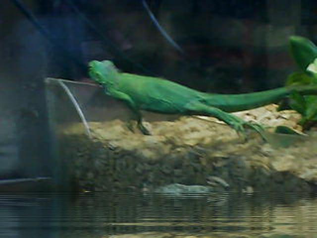 Dragon vert à la sieste