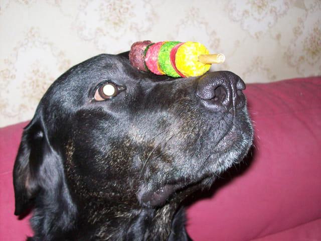 Dressage de notre chienne Maya