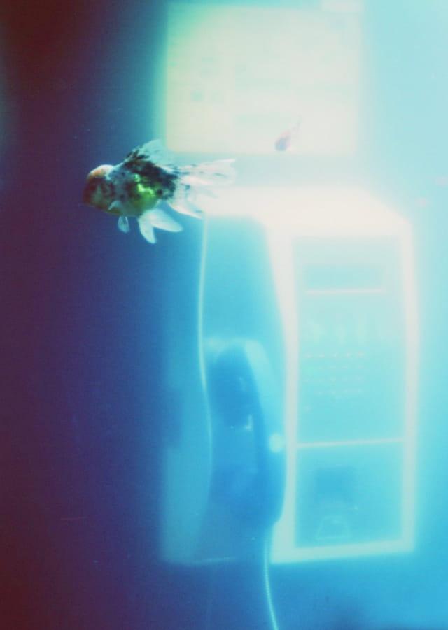 Drôle d'aquarium 1