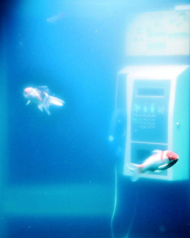 Drôle d'aquarium 2