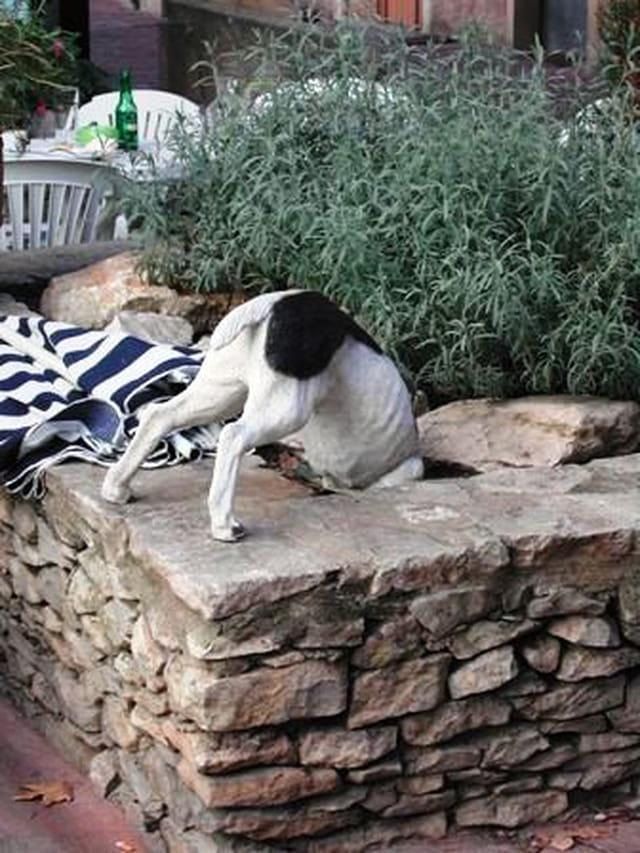 Drôle de chien !