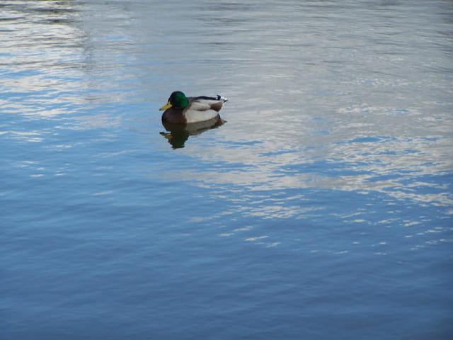 Du ciel bleu dans l'eau!!