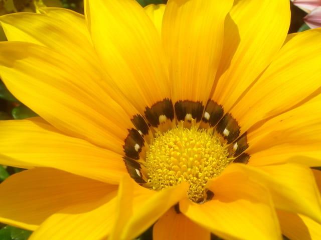 Du soleil dans les fleurs