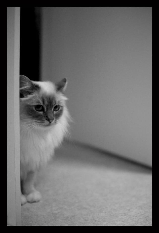 Duchesse noir et blanc 2