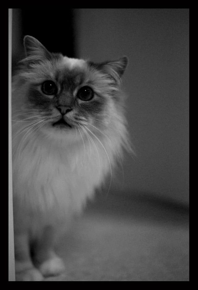 Duchesse noir et blanc 3