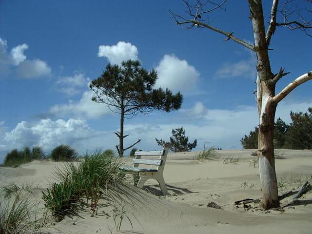 Dunes à la palmyre