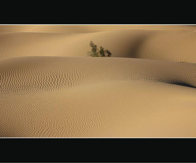 Dunes du Gourara 13