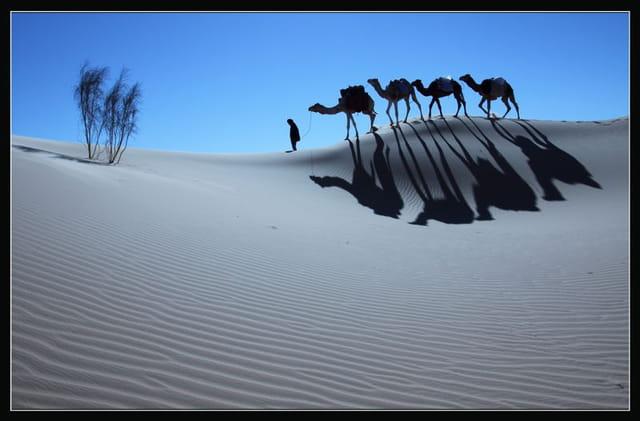 Dunes du Gourara 2