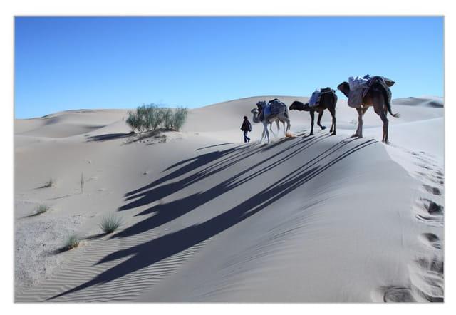 Dunes du Gourara 3
