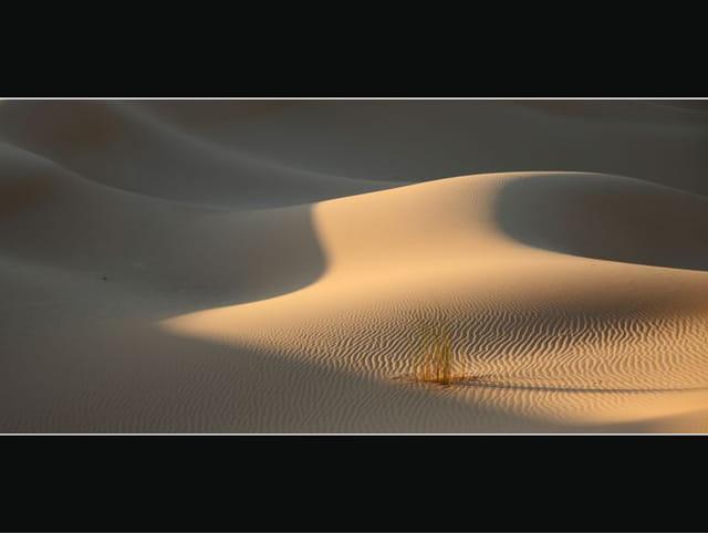 Dunes du Gourara 9
