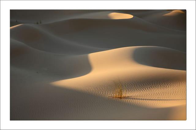 Dunes du Gourarat 12