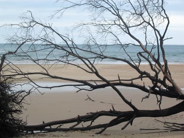 East woody beach