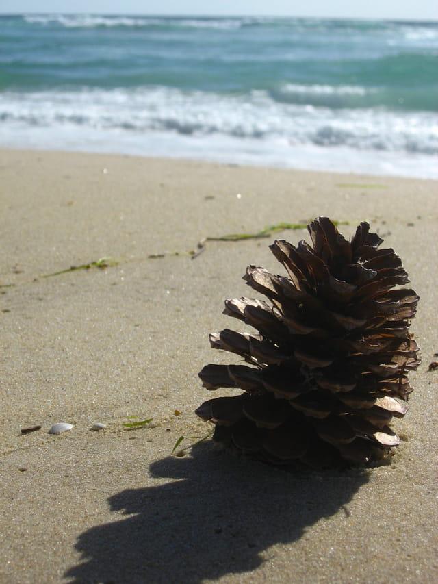 Echouée sur le sable