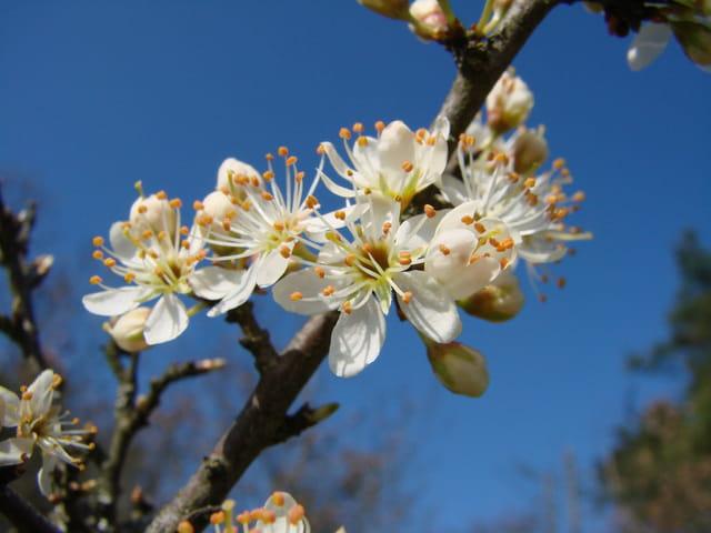 Eclosion du printemps