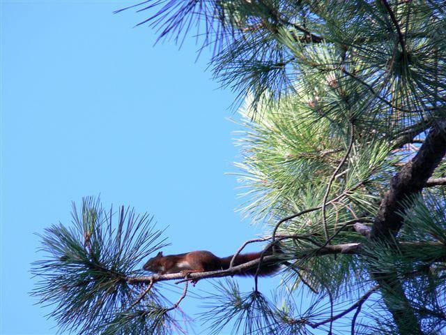 �cureuil dans un arbre...