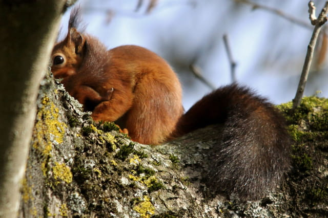 ecureuil protege son petit sous lui