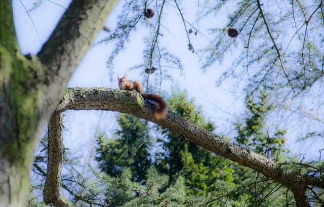 ecureuil sur sa branche