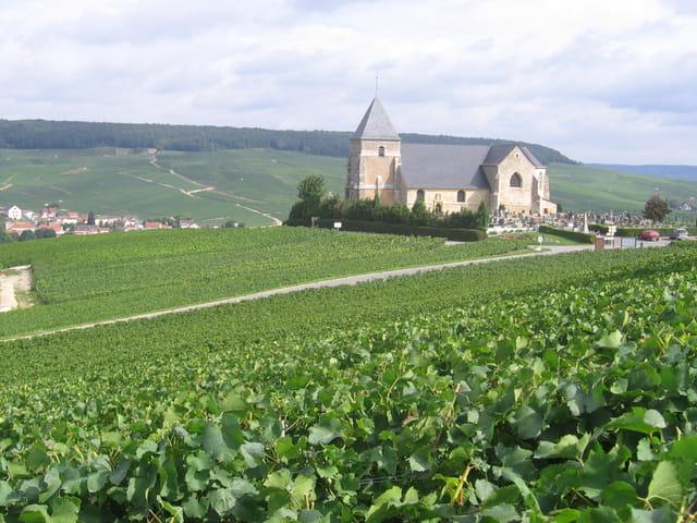 Eglise au milieu des vignes