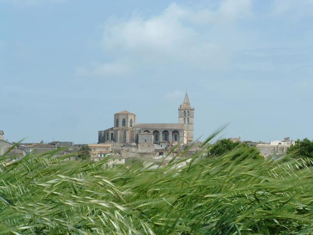 Eglise et champs de blé
