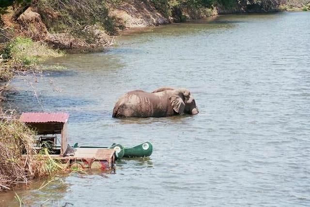 Elephant dans le Zambeze