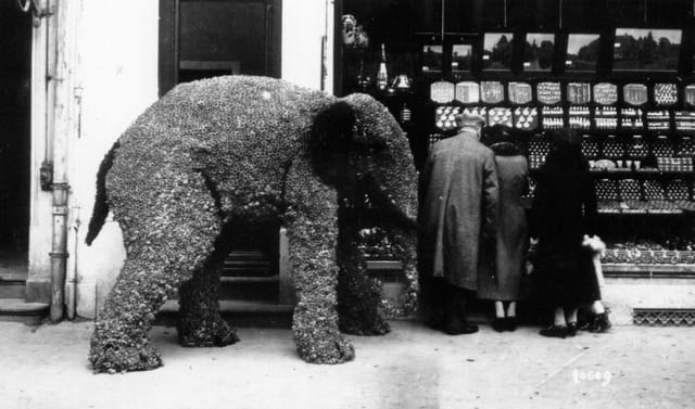 Elephant en jonquilles.