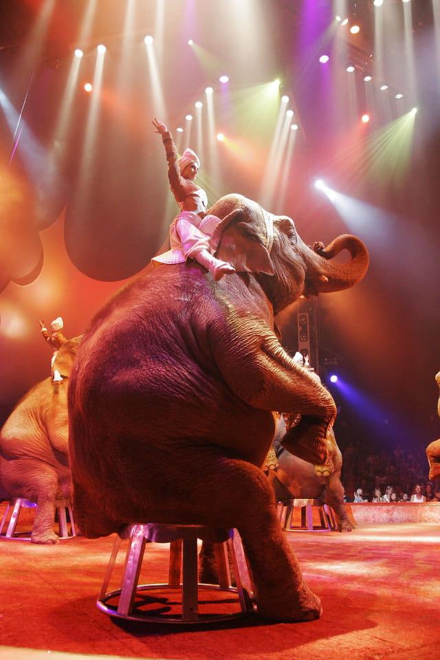 Elephants Gruss