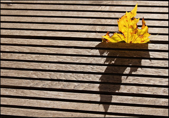 En finir avec l'automne.....