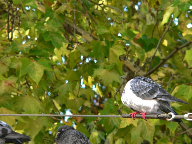 En mars, un froid de... pigeon !