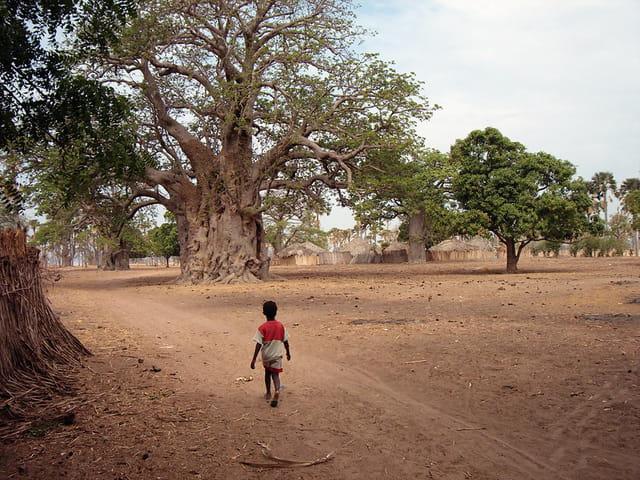 Enfant au baobab