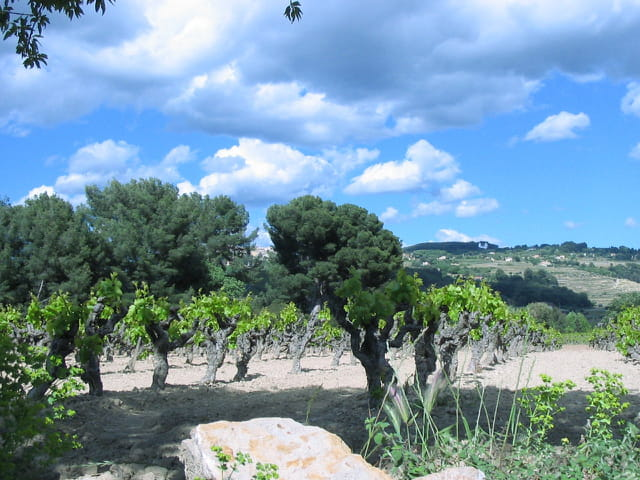 Entre ciel et vigne