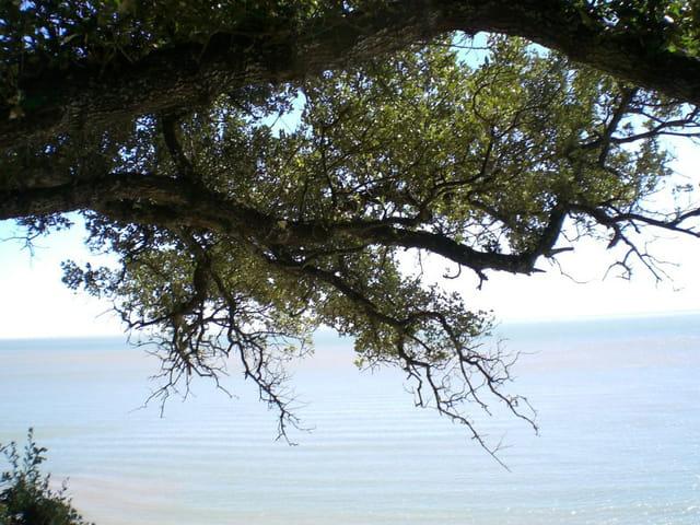 Entre mer et forêt