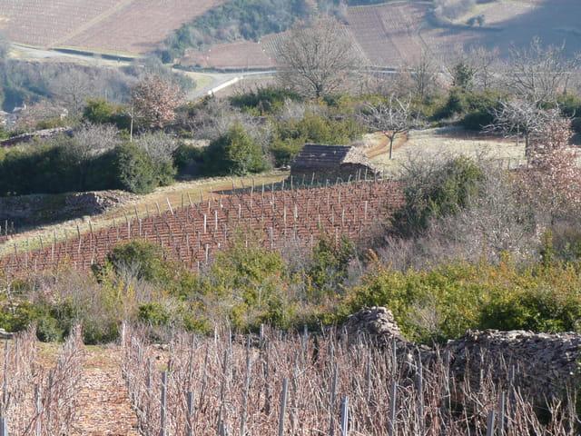 Entre vignes et vieilles pierres