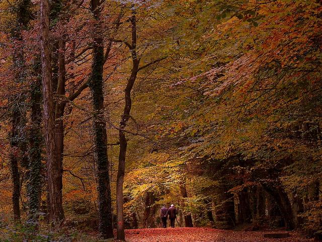 Entrez dans l'automne